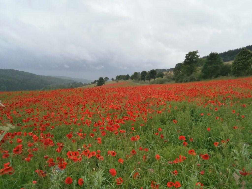 überraschende Schönheit hinter einer Biegung des Weges auf einer Wanderung durch die Eifel